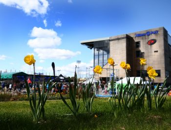 Daffodils on the bank behind the Piazza. Saracens v Leicester Tigers, Aviva Premiership, Rugby Union, Allianz Park, 11/04/2015 © Matthew Impey/Wiredphotos.co.uk. tel: 07789 130 347 email: matt@wiredphotos.co.uk